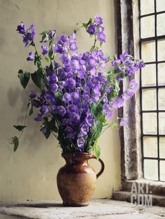 Canterbury Bells Photographic Print Clay Perry Art Com Flowers Photography Beautiful Flowers Flowers