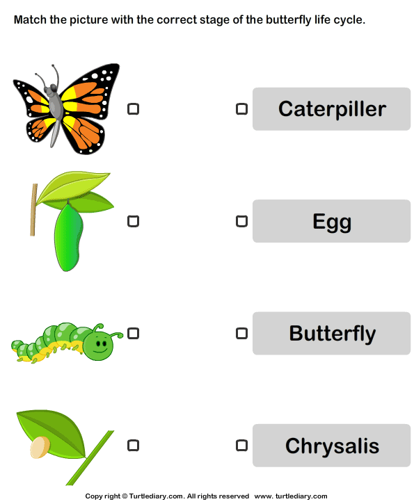 Butterfly life cycle Match pictures with correct name – Animal Life Cycle Worksheets
