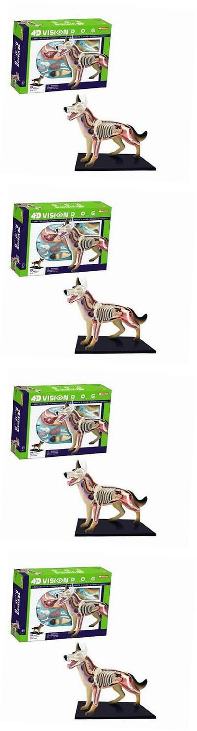 Animals and Nature 31744: 4D Vision Dog Anatomy Model -> BUY IT NOW ...
