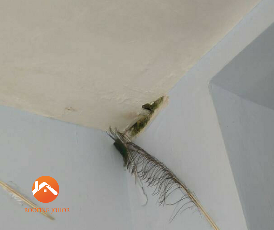 Roofing Contractors Roof Leak Specialist In Johor Malaysia Roof Inspection Leaking Roof Roof Repair