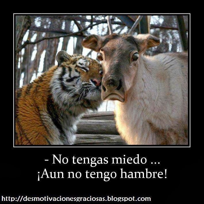 frases chistosas de animales - Google Search | animales chistosos ...