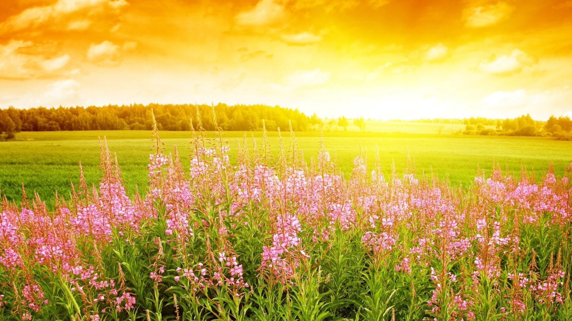 Sun Bright Nature Flowers Scenery Summer Wallpaper Field Wallpaper Sunrise Wallpaper