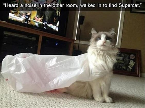 17 Funny Cat Snapchats To Just Brighten Your Day