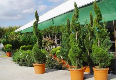Poda topiaria | Jardineria