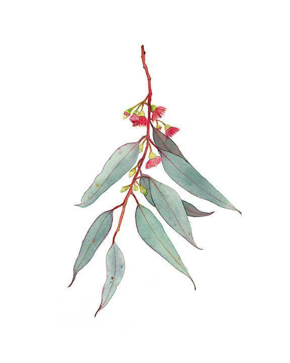 Red flowering gum print, Australian native eucalyptus