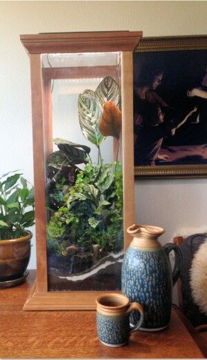 Idea By Trish Baker On Vivariumd Terrarium Shop Terrarium