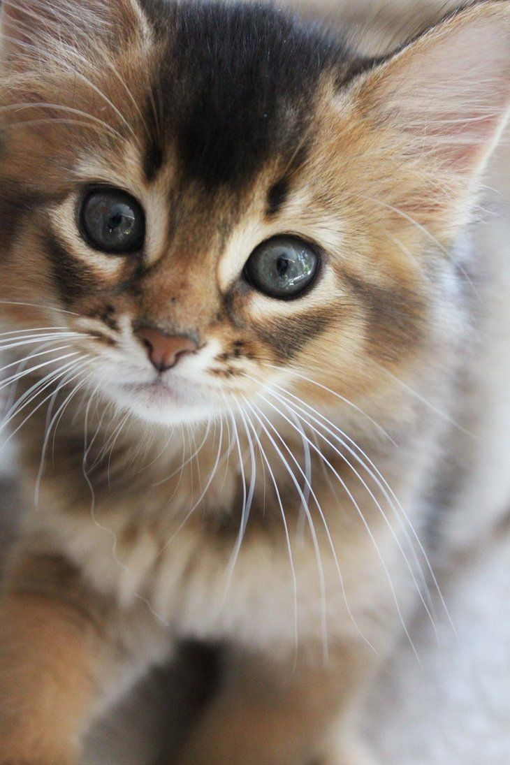 Flamekit-male-energetic cat who loves to play-fight with his brother foxkit