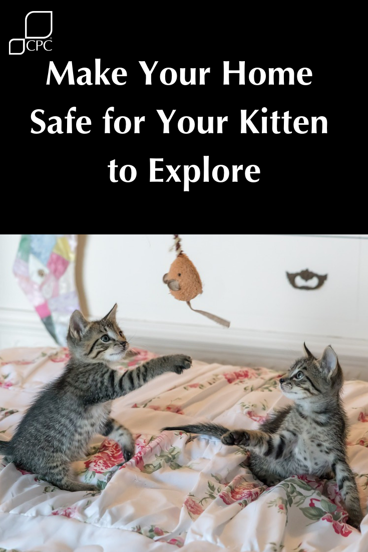 Kitten Or Cat Proof Your Home Cat Proofing Kitten Cats