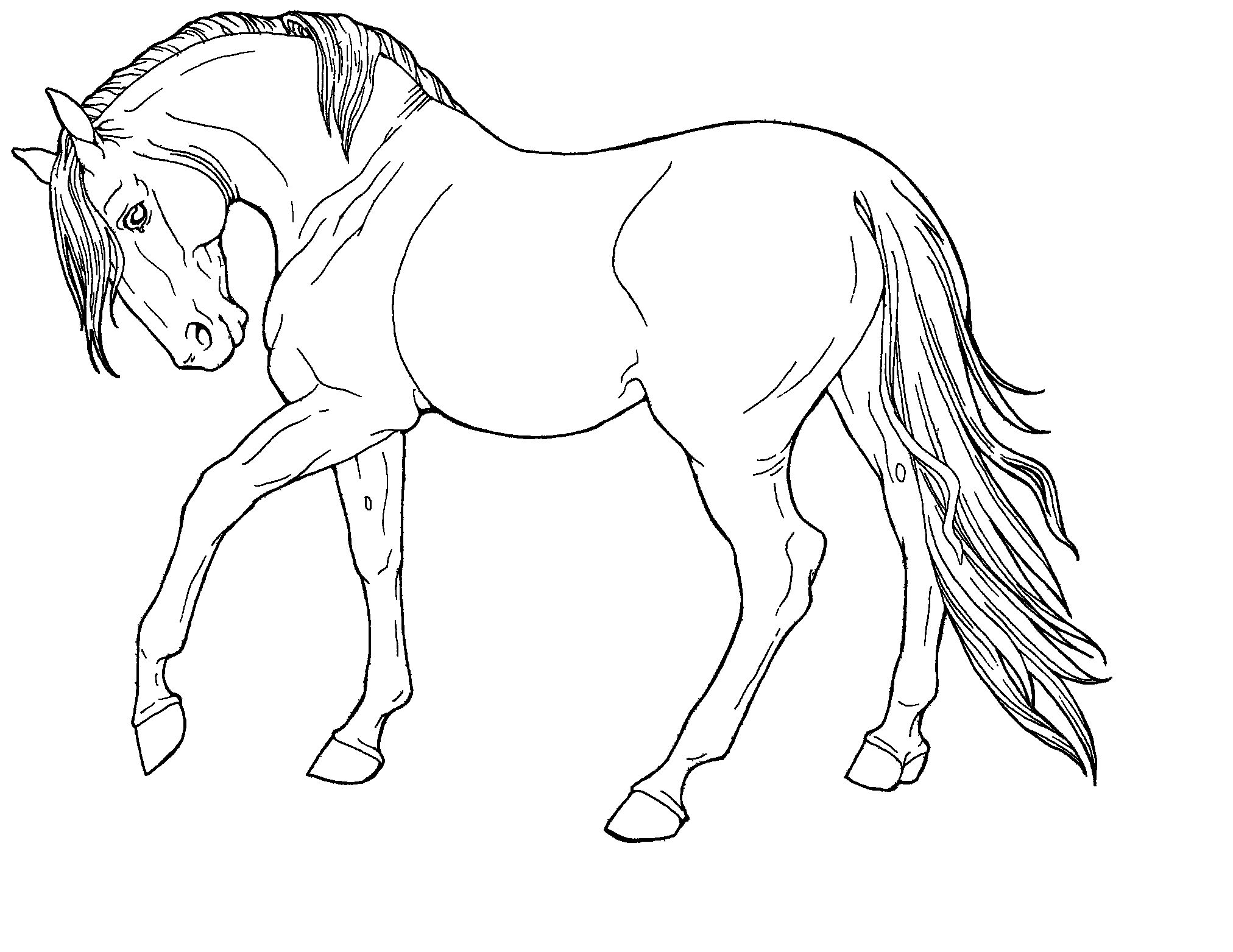Line Drawings Of Animals | Free Line Art-Fine Horse in HARPG ...