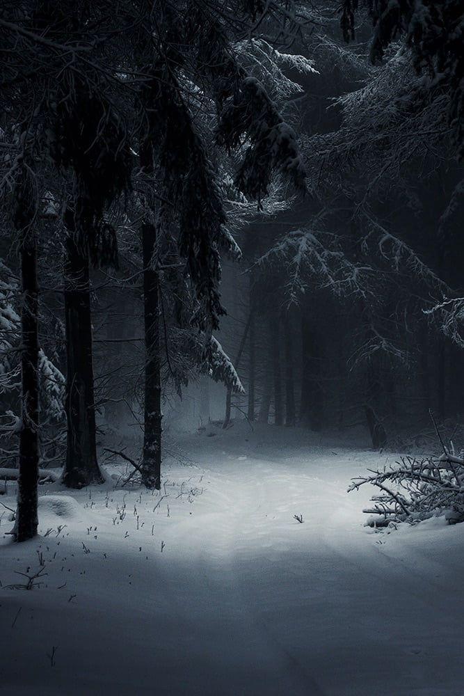 Dark Winter Forest - Wallpaper