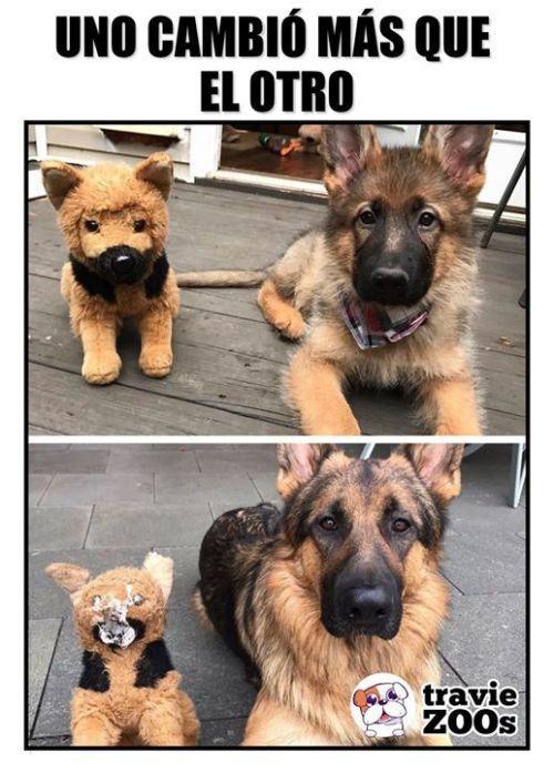 Perros Graciosos Http Enviarpostales Es Perros Graciosos 157 Perros Animales Funny Animals Animals Beautiful Best Memes