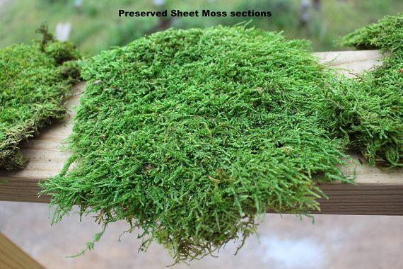Preserved Moss Samples Quart Bag Of You Choose By Teresab123 Soaps Pinterest