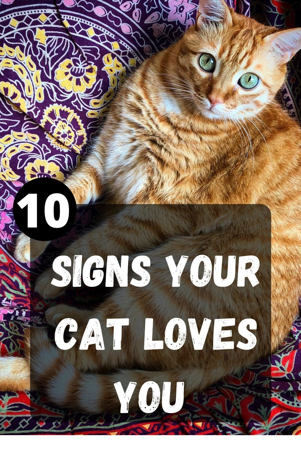 10 Signs Your Cat Loves You Welfar4us In 2020 Cute Cats And Dogs Cat Love Grey Kitten