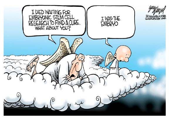 Cartoon  Funny  Stem Cell Engineering  Pinterest  Pro Life  Stem Cell Research Stem Cells Pro Life Editorial Cartoon