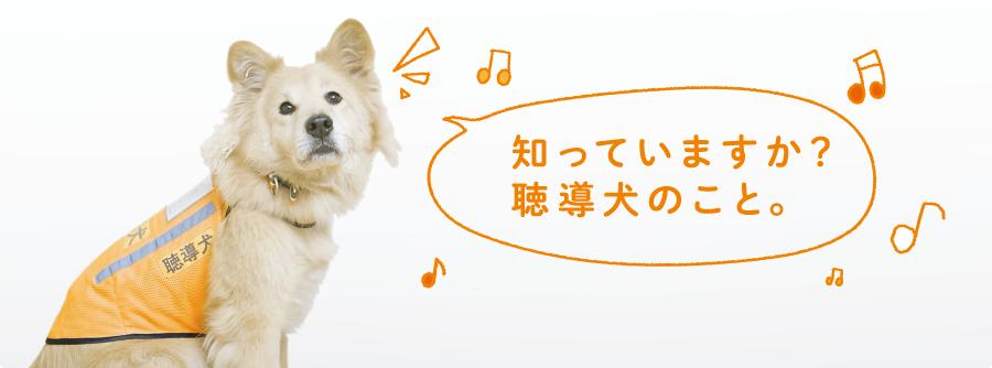 聴覚障害者に必要な情報を知らせるのが聴導犬です。もっと多くの人に聴導犬のことを知ってもらいたい。