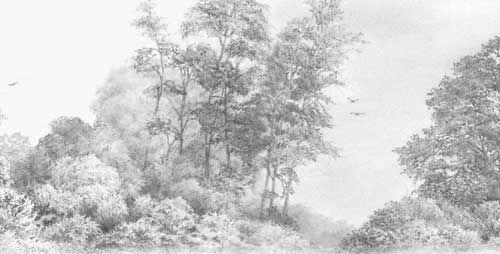 Pencil Sketching Shrubs Google Search Tree Drawing Realistic Drawings Bush Drawing