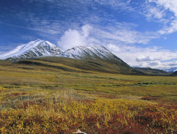Las tundra ocupan una décima parte de toda la tierra firme del ...