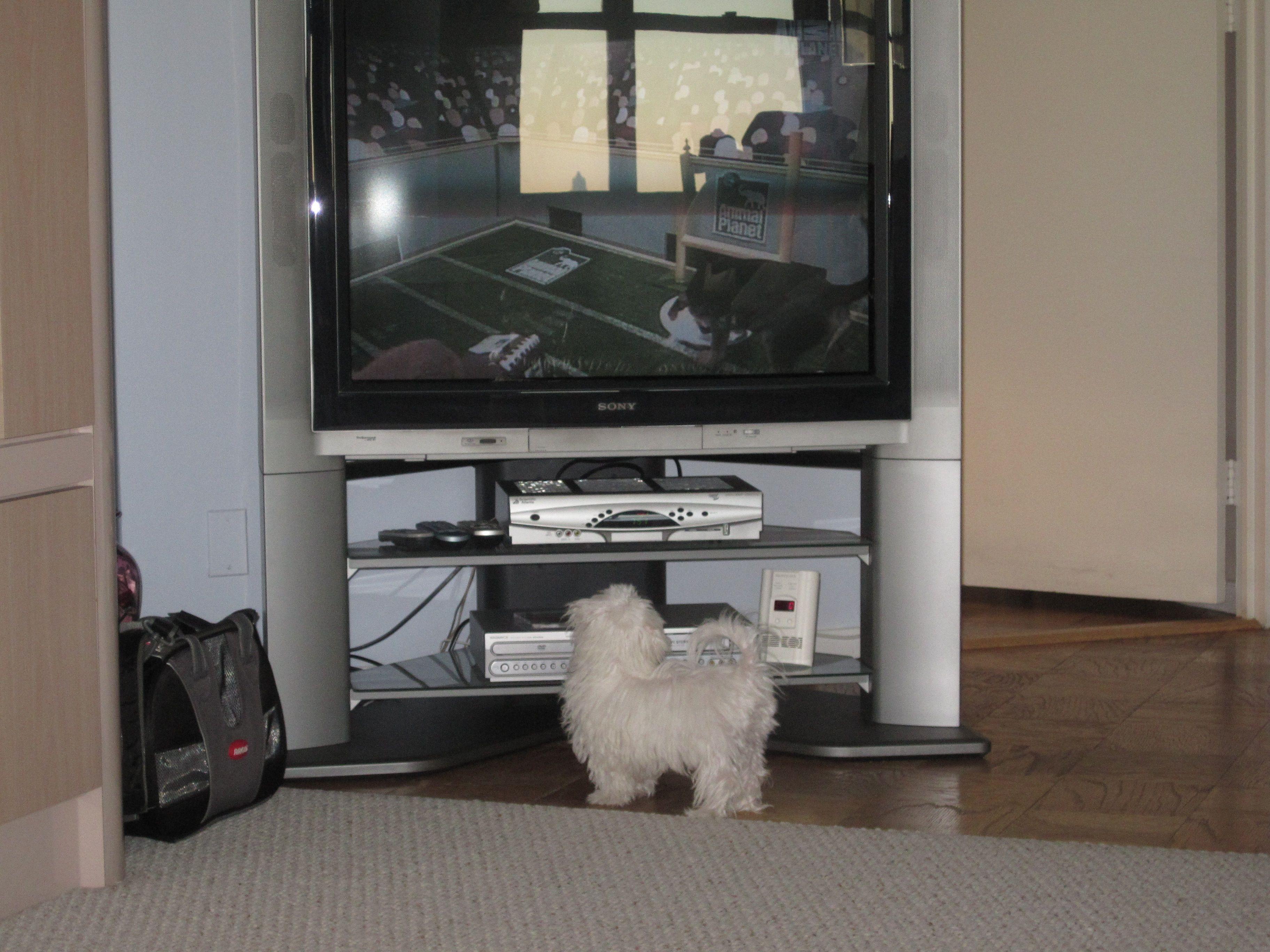 Watch Tv Tv Flat Screen Flatscreen Tv