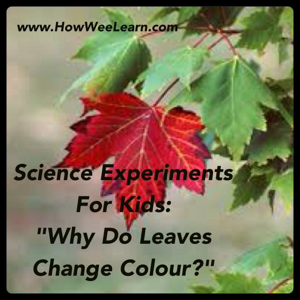 Science Experiments for Kids: Why do Leaves Change Color? | Science ...