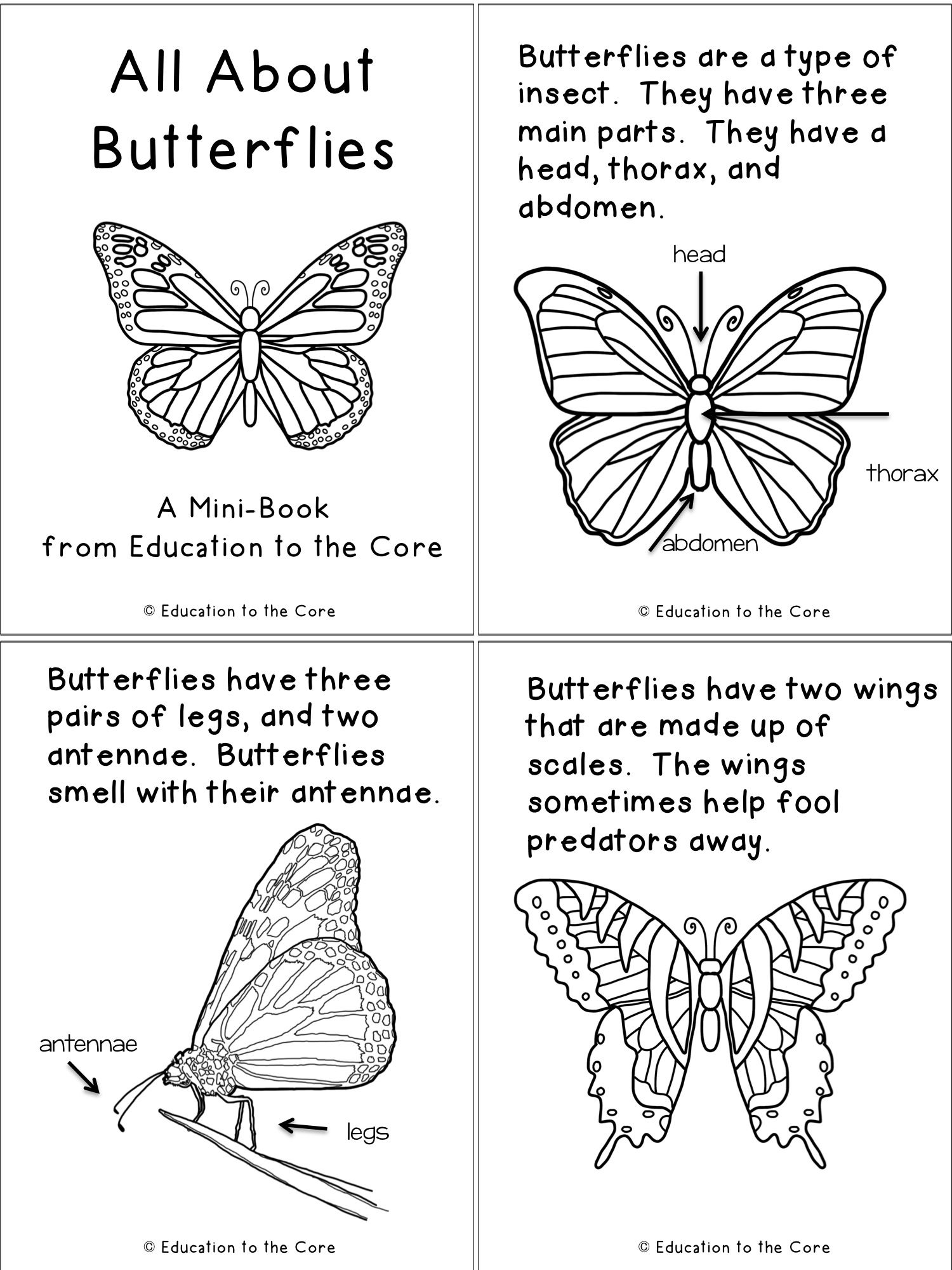 graphic relating to Butterfly Life Cycle Printable Book named Butterfly Lifestyle Cycle System and Stop Examine And A One of a kind