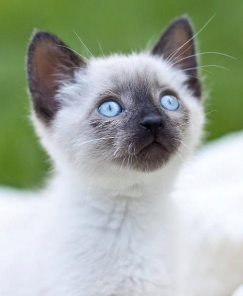 Pin By Tami Williams On Crazy Cat Cuteness Cute Baby Cats