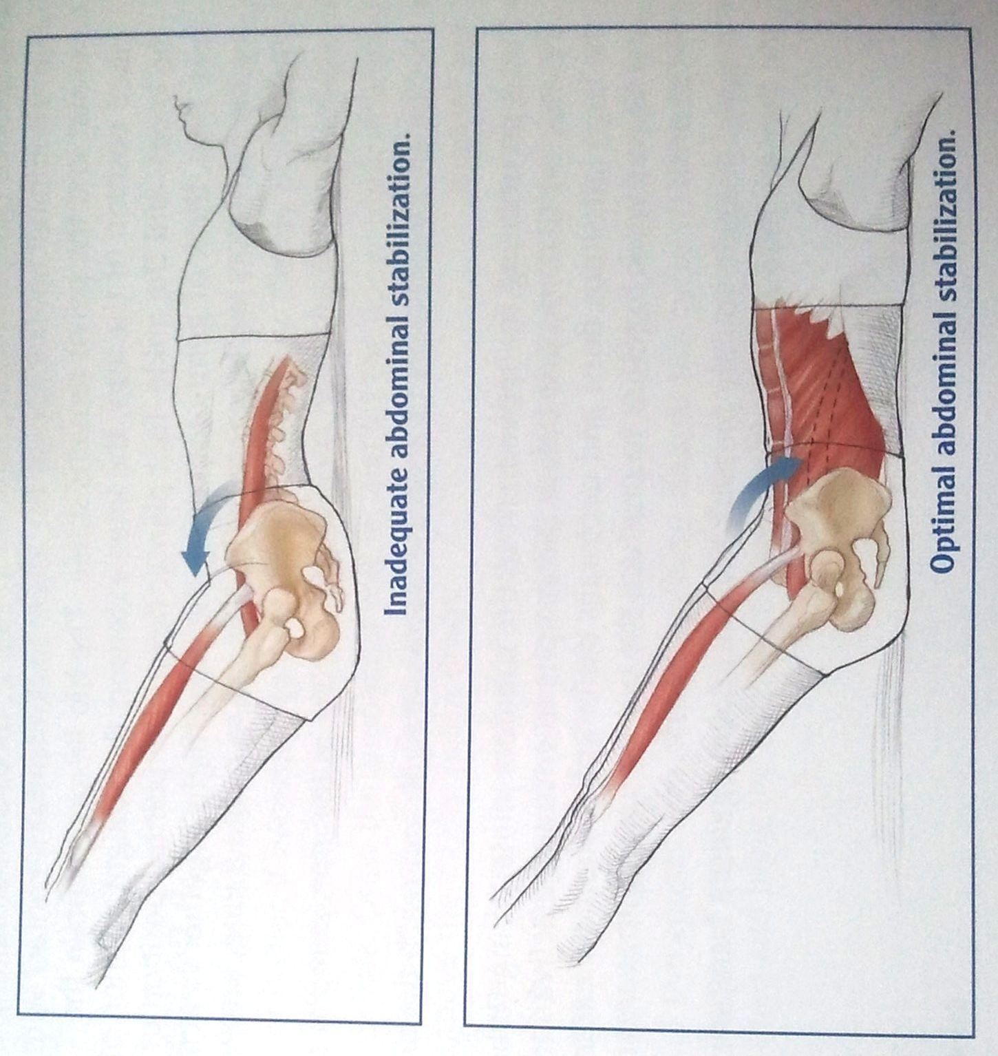 Ungewöhnlich Bild Von Bauch Anatomie Ideen - Menschliche Anatomie ...