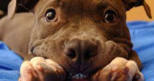 Pin by Beth Masters on Clan Buchanan | Pinterest | Smile, Teeth and Dogs