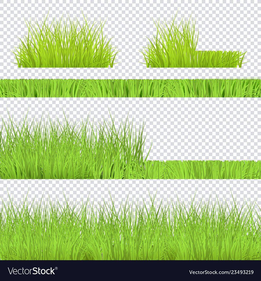 Green grass border for summer landscape vector image on