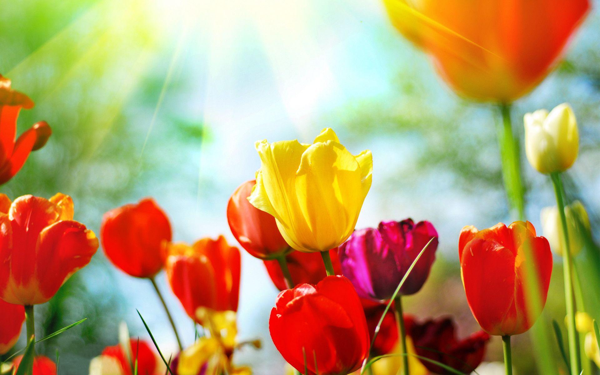 1920x1200 spring flowers desktop background free download wallpaper 1920x1200 spring flowers desktop background free download wallpaper hd mightylinksfo
