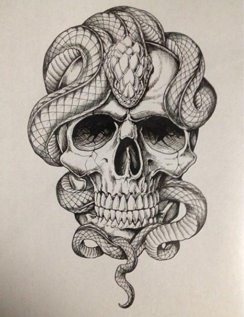 real drawings of reptiles  drawings I like  Pinterest  Reptiles