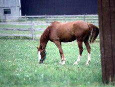 Your Horse's Strange Slobber