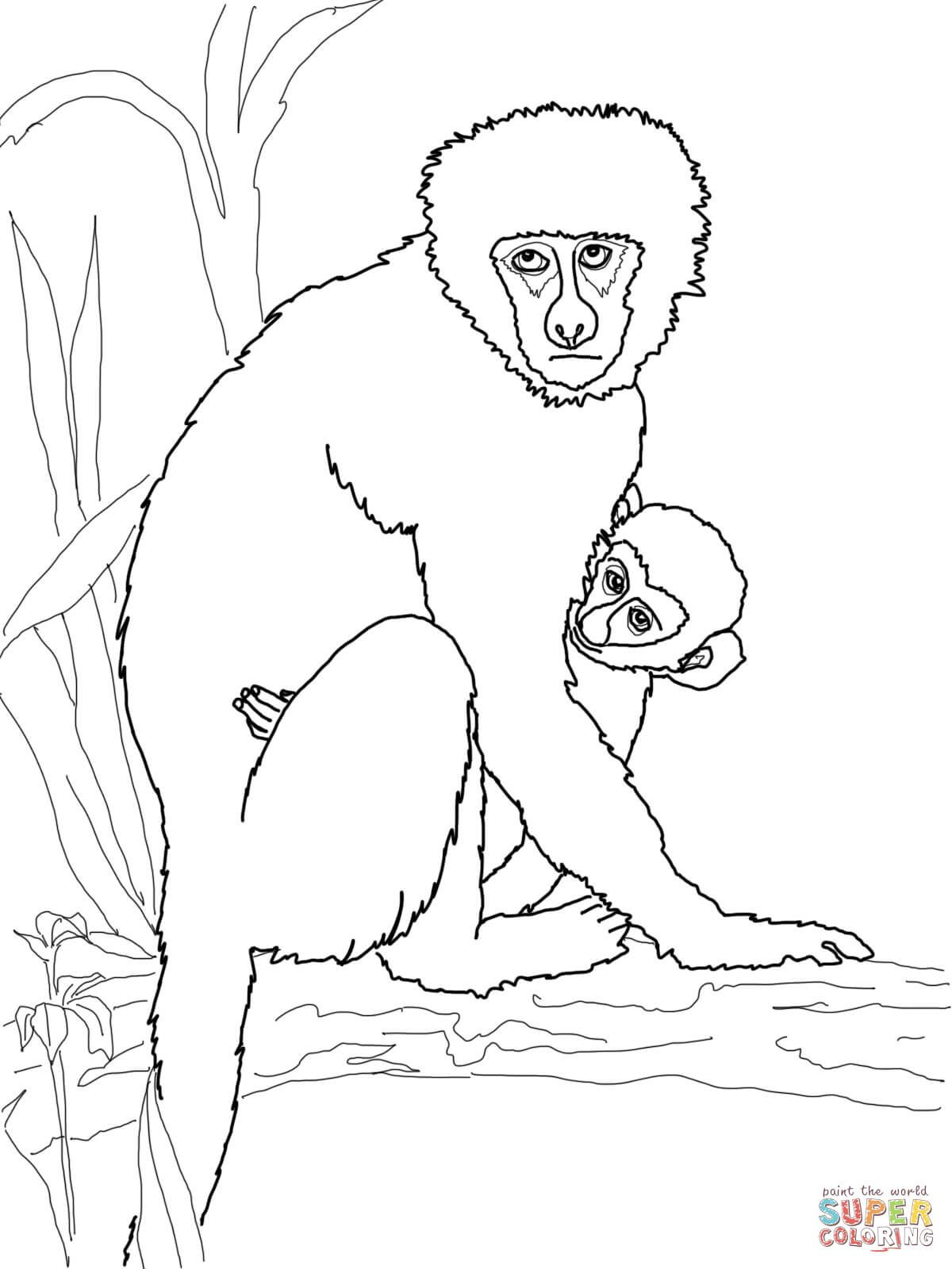 Vervet Monkey With Its Baby Super Coloring Monkey Coloring Pages