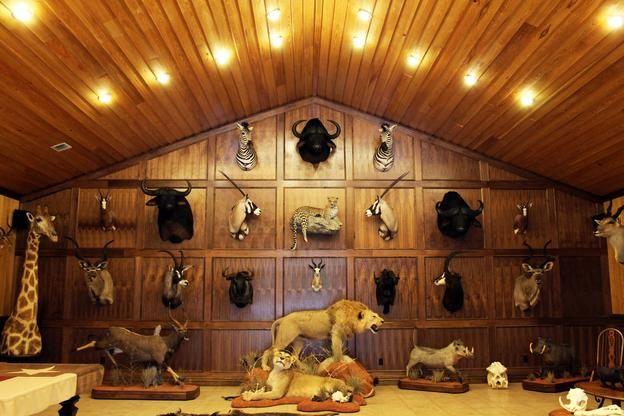 Image result for trophy room kern home Pinterest Trophy rooms