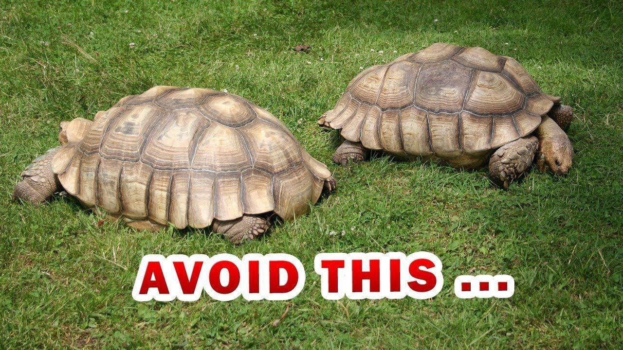 How to Properly Take Care of a Big Tortoise Tortoise