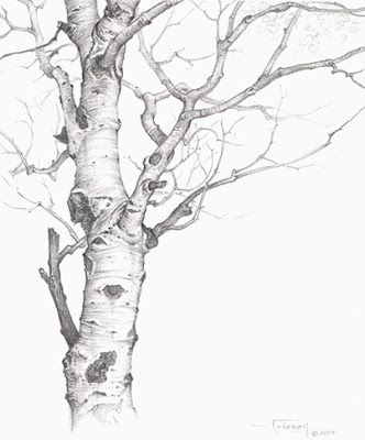 Tree drawing this makes me want to break out the old sketchbook and just get