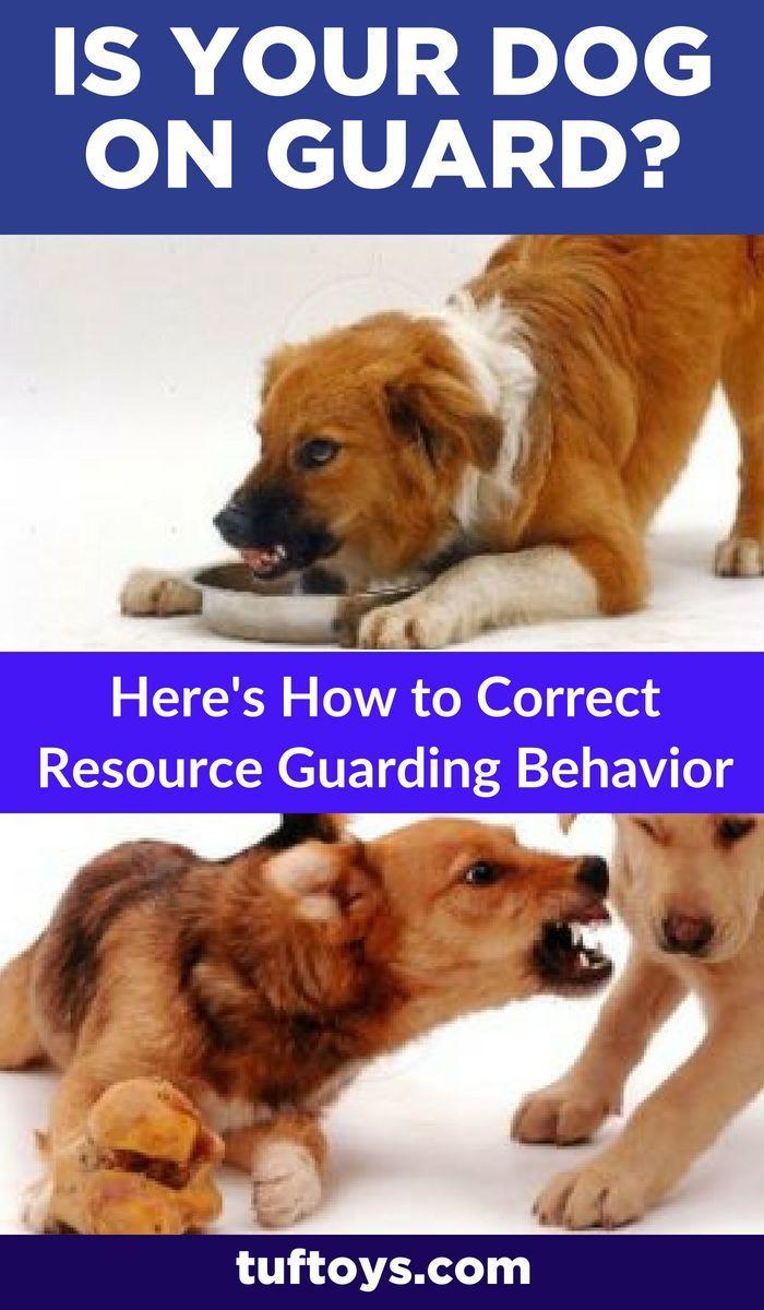 How To Correct Resource Guarding Behavior Dog Training Dog