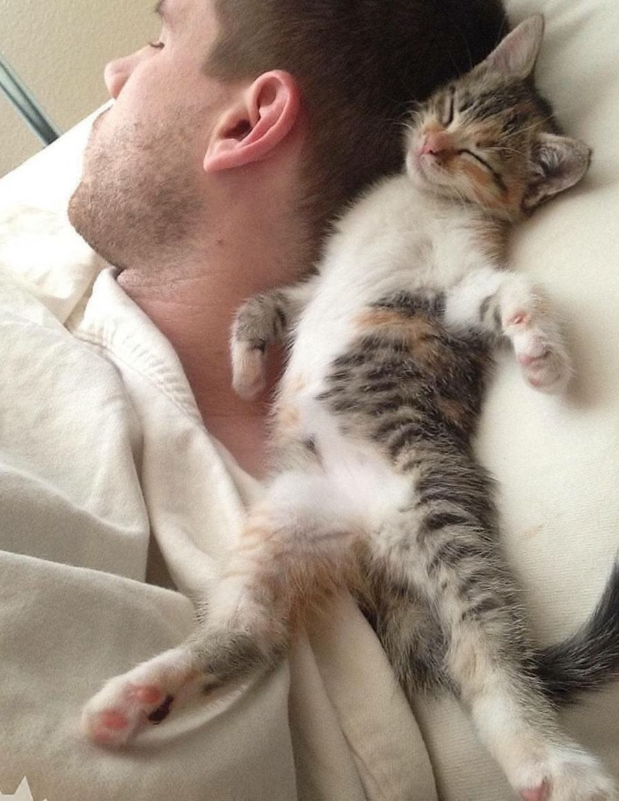 Pin By Bonnie Happy To Share On Cats Cats Cute Cats Kittens
