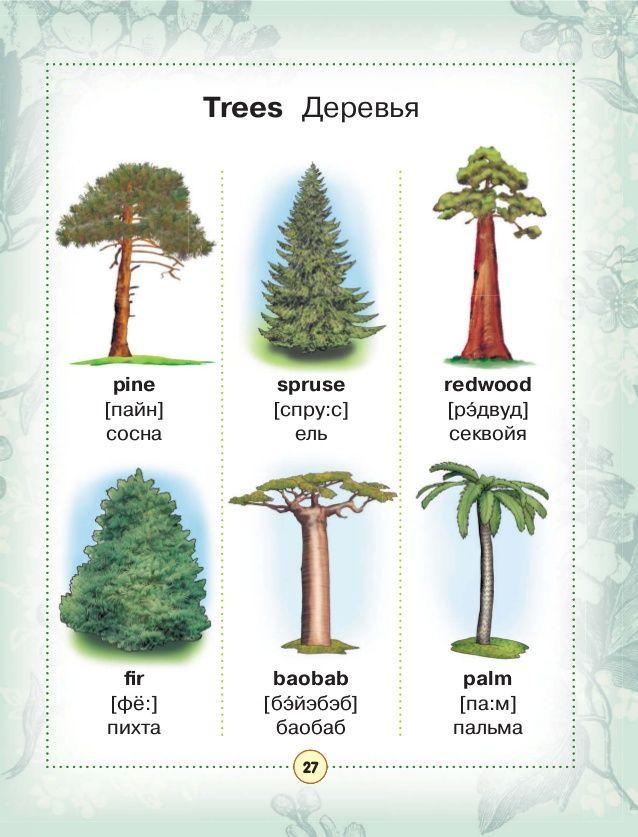 же, что деревья в картинках на английскому поможет избежать
