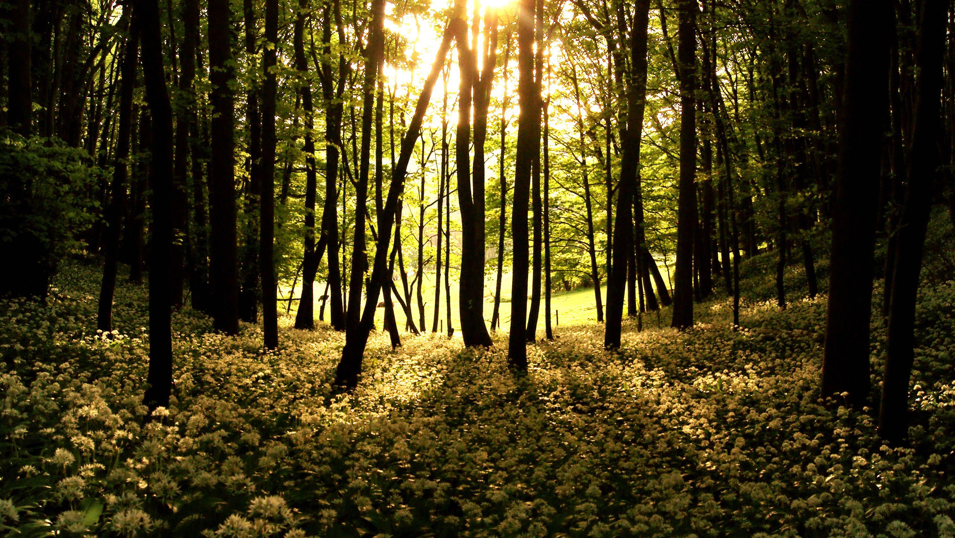 Haikus From The Woods By Whiteplumfragrance On Deviantart
