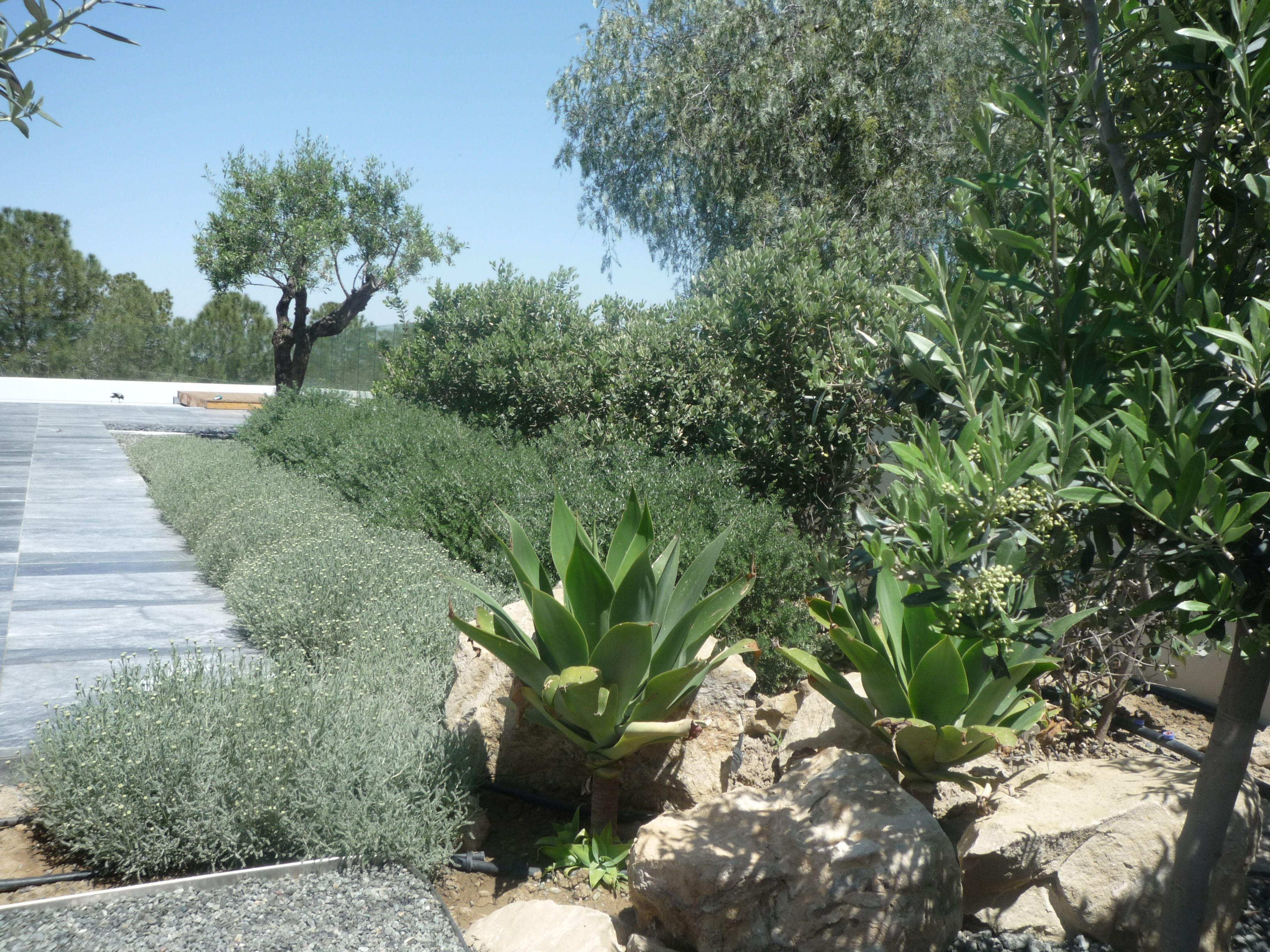 6 Lessons For Mediterranean Climate Gardening: Mediterranean Climate Gardens