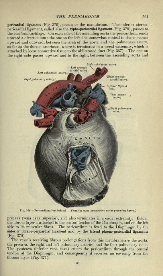 Anatomy Descriptive And Surgical Henry Gray L7th Edition 1908