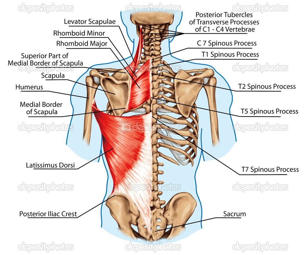 Brazos rigidez muscular en