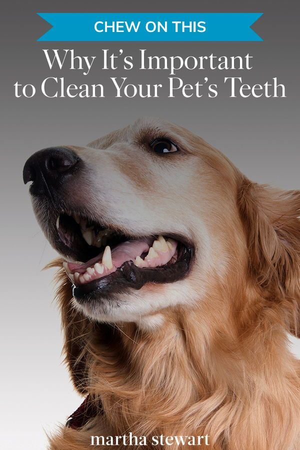 Chew on This Why It's Important to Clean Your Dog or Cat