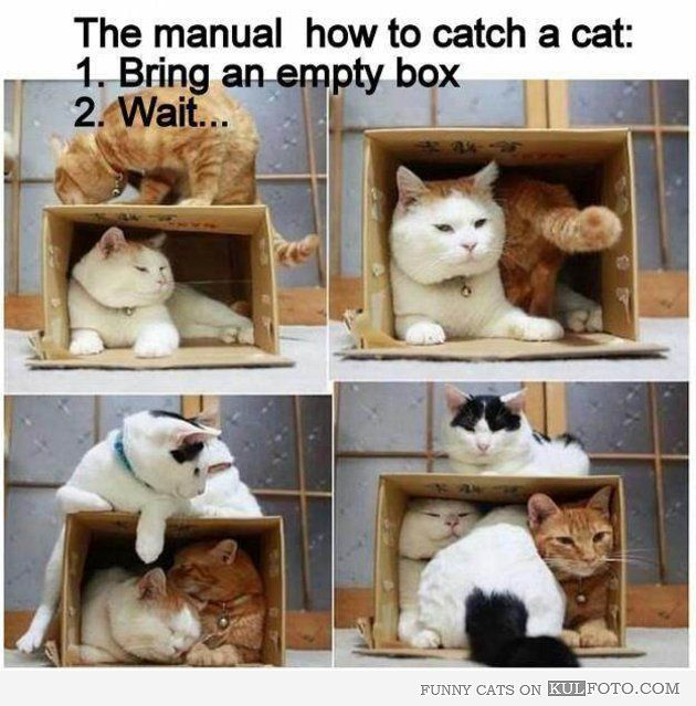 How To Catch A Cat Funny How To Trick For Catching A Cat 1 Bring An Empty Box 2 Wait Crazy Cats Cute Animals Cat Love