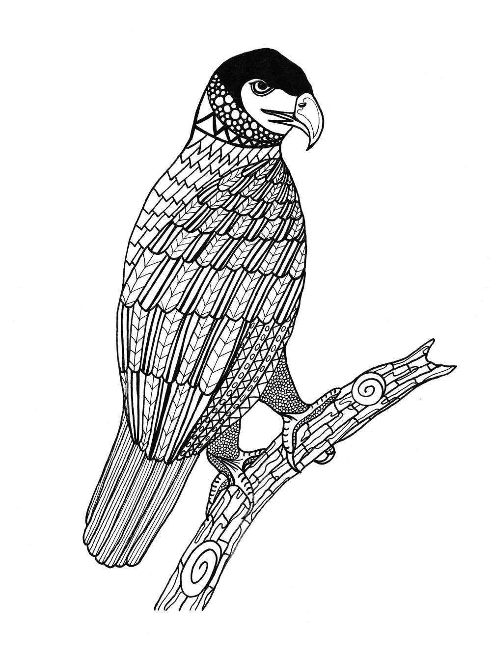 King Of The Sky Adult Coloring Page Animal Coloring Pages
