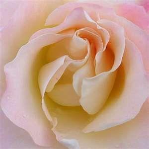 """Résultat de recherche d'images pour """"fleur o'keefe"""""""