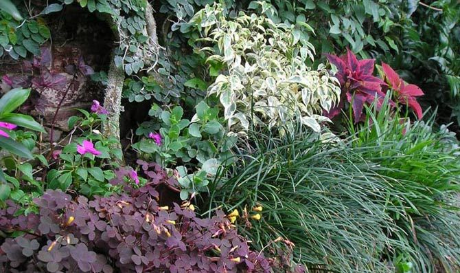 Composición de plantas de sombra El jardín Pinterest Plantas