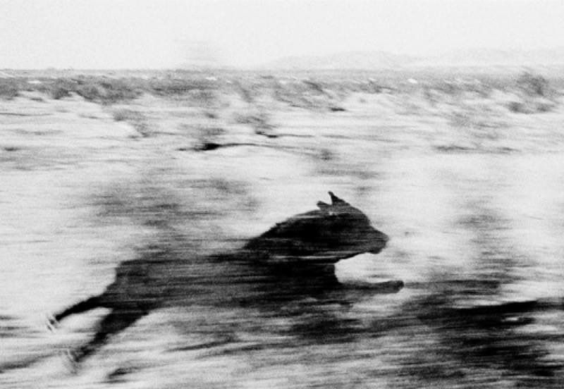John Divola - Dogs Chasing My Car in the Desert, 1996-2001