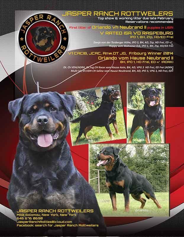 First Litter Of Orlando Vh Neubrand Ii Puppies In Usa V1 Cacib
