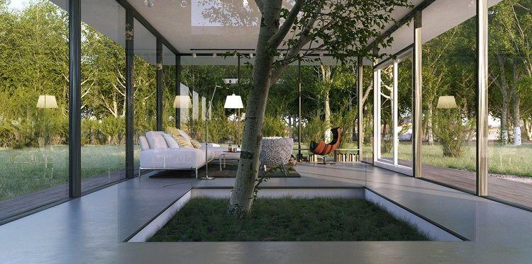 Arbre dintérieur dans les espaces modernes  terrasse couverte et ...